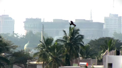 Hawk flying across skyline in Bangalore India - stock footage