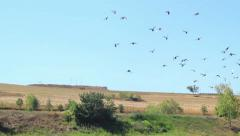 Pigeons Flying - stock footage
