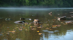 Fog on River Stock Footage