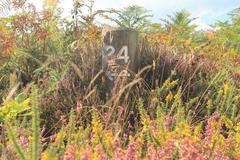 Overgrown Mile Marker - stock photo