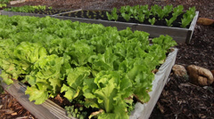 Vegetable garden 1 Stock Footage