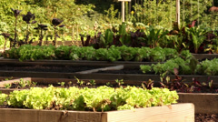 Raised beds 1 Stock Footage