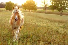 horse running at sunset - stock photo