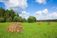Stock Photo of field with haystacks and trees