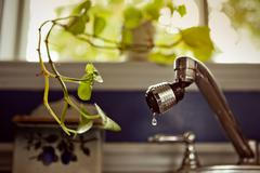 indoor plant asking for little bit of water - stock photo