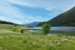 summer dandelion meadow (italy). - stock photo