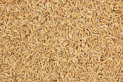 Rice husk Stock Photos