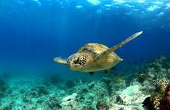 Sea turtle swimming underwater Stock Photos