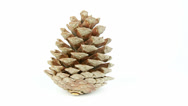 Stock Video Footage of Pine Cone Rotate