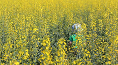 Sad lonely baby in rape field with yellow flowers Stock Footage