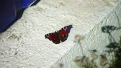 Tortoiseshell Butterfly (Aglais urticae) on concrete Stock Footage