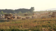 Stock Video Footage of Cowherd and herd of cows walking far away on hill at twilight