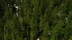 Aerial view Spruce coniferous forestation, Rockies - stock footage