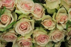 pale pink roses in a wedding arrangement - stock photo