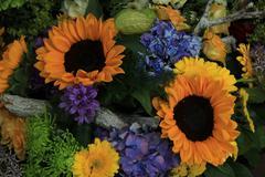 Sunflowers in a wedding arrangement Stock Photos