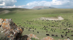 Sheep, mountains, rocky, landscape, nature, Kyrgyzstan, livestock, Central Asia - stock footage