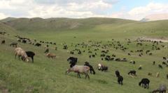 Kyrgyz sheep grazing Stock Footage