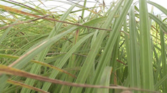 Movement in the grass Stock Footage