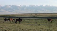 Horses in Kyrgyzstan - stock footage