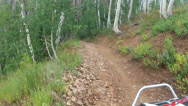 Stock Video Footage of 4x4 RZR ride recreation Aspen pine forest HD 0002