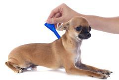 Tick and flea prevention Stock Photos