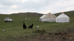 Chickens and an old Lada near a yurt camp Stock Footage
