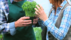 Cheerful woman buying plants talking to the gardener Stock Footage