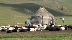 Yurt camp with livestock sheep in Kyrgyzstan Central Asia Stock Footage