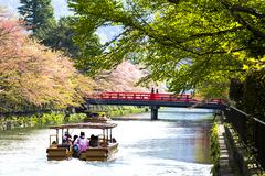 Sakura in Kyoto Japan for adv or others purpose use Stock Photos