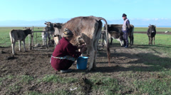 Family milking cows at Song Kol lake in Kyrgyzstan, Central Asia Stock Footage