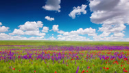 Stock Video Footage of field of flowers and the cloudy sky