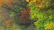 Stock Video Footage of autumn foliage