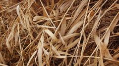 Dried Autumn Straw Close Up Stock Photos
