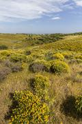 algarve countryside hills with yellow bushes in spring - stock photo
