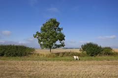 Pet dog and young ash tree Stock Photos