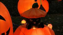Halloween musta kissa kurpitsa pop up Arkistovideo