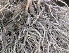 Root System Stock Photos