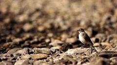 Birdie on the rocks Stock Footage