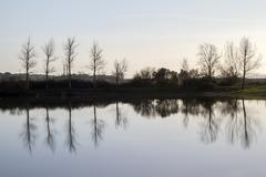 Tranquil lake with bare leafless trees Stock Photos