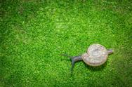 Snail closeup Stock Photos