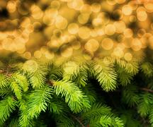 christmas fir gold abstract background - stock illustration