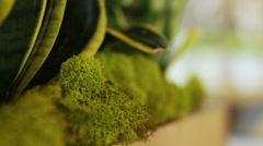 Decorative green moss Stock Footage