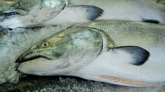 Sea salmon Pikes Fish Market  Seattle, USA Stock Footage