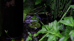 Zen Pond with Bamboo and Lily Pads - stock footage