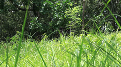 Glass field and the tropical rain forest Stock Footage