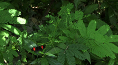 Butterfly in the Amazon rain forrest - stock footage