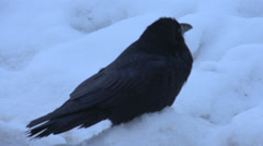 Nature, crow in the snow, 1-stop open Stock Footage