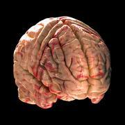 Anatomy Brain - Isometric View on Black Background Stock Photos