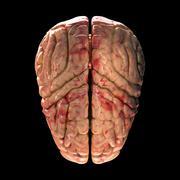 Anatomy Brain - Top View on Black Background - stock photo