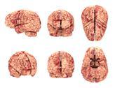 Stock Photo of Anatomy Brain - 6 Views Isolated on White